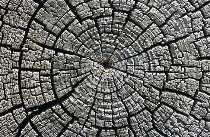 800px-weathered_growth_rings_at_aztec_ruins_national_monument