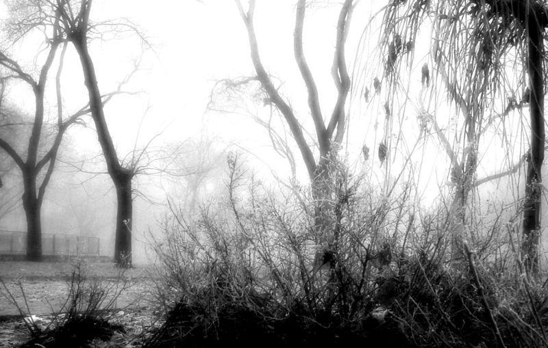 800px-mist