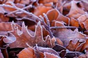 1313983_frozen_leaves