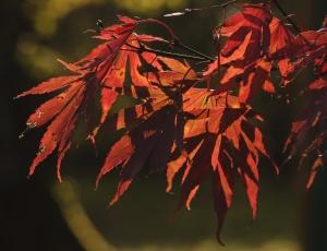 1314711_autumn_leaves_3