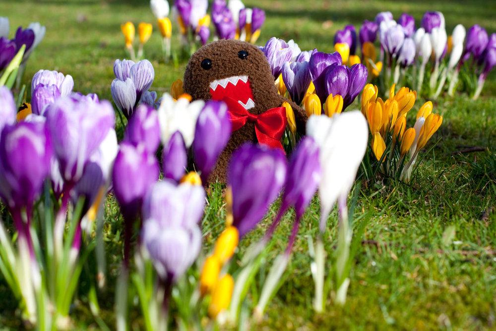 Domo_loves_spring_by_lawa